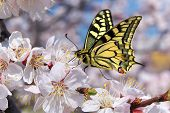 picture of single flower  - Butterfly and white flower - JPG