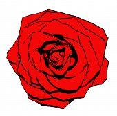 stock photo of single white rose  - Vector single red rose flower isolated on white background - JPG