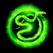 image of green snake  - Green fire snake in blazing circle on black background - JPG
