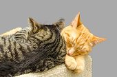 pic of snoopy  - Two cats sleeping together - JPG