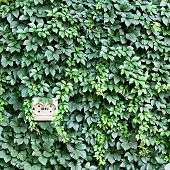 stock photo of reprocess  - power outlet built into the background of leaves - JPG