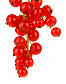 Branch of red currant isolated on white