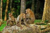 Monkeys Family Stay Together With Warm Moment
