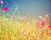 stock photo of wildflowers  - a field of wildflowers done with a retro vintage instagram filter - JPG