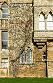 stock photo of english ivy  - Christ Church College famouse travel Oxford england uk - JPG