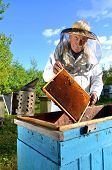 foto of inspection  - Experienced senior beekeeper making inspection in apiary after summer season - JPG