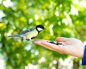 stock photo of chickadee  - Bird sits on human hand - JPG