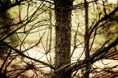pic of crotch  - trunk of tree in the forest with boughs and branch - JPG