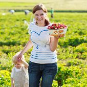 picture of strawberry blonde  - mother and her little kid child on organic strawberry farm in summer picking berries - JPG