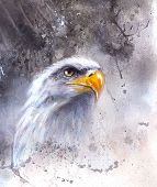 pic of eagles  - beautiful airbrush painting of eagle on an abstract background one stretching his black wings to fly on abstract background - JPG