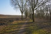 picture of row trees  - Row of trees along a field in winter - JPG