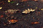 foto of dirt road  - Fallen oak leaf on a dirt road - JPG