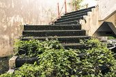 foto of abandoned house  - stone stairway filled with grass in an abandoned house - JPG