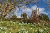 stock photo of church-of-england  - Church with snowdrops and flowers near cardinham woods next to bodmin in cornwall england uk