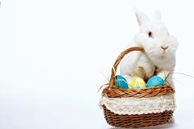 stock photo of little puppy  - Happy Easter - JPG