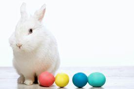 stock photo of creatures  - Happy Easter - JPG