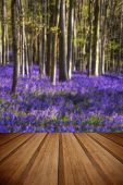 stock photo of harebell  - Beautiful landscape of Spring bluebells in forest with wooden planks floor - JPG