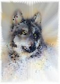 stock photo of werewolf hunter  - Wolf head illustration - JPG