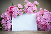 image of carnation  - bright bouquet of carnations on the table - JPG