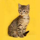 picture of yellow tabby  - Tabby beautiful kitten sitting on yellow background - JPG