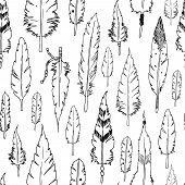 picture of feathers  - Vector feather background - JPG