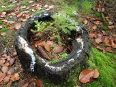 pic of bohemia  - spruce growing on a tree stump South Bohemia Czech Republic  - JPG