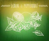 stock photo of peppermint  - Illustration of lemon and peppermint made in EPS10 - JPG