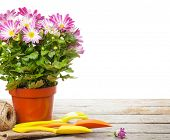 foto of flower pot  - Potted flower and garden tools - JPG