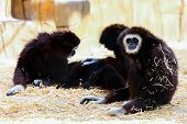 stock photo of marmosets  - Monkeys sitting on the straw in zoo - JPG