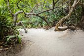 stock photo of jungle exotic  - a tropical and lush jungle on an exotic island called Phi Phi leh Thailand - JPG