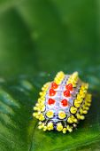 picture of cocoon tree  - a cute color butterfly worm on branch  - JPG