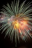 picture of firework display  - Colorful firework in a night sky - JPG