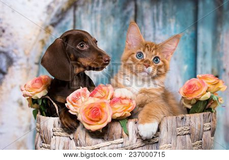 poster of cat and dog, dachshund puppy chocolate color and kitten red