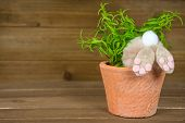 Rear View Of Brown Fuzzy Bunny In Green Plant Flower Pot On Rustic Wood poster