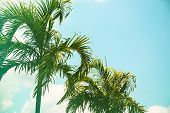 Coco Palm Tree Cinematic Toned Photo. Tropical Vacation Destination Place. Exotic Island Holiday. Tr poster