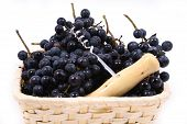 image of gleaning  - Bunch of black juicy grapes over white - JPG