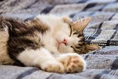 Close-up Of Sleeping Tabby Cat On Blue Bedding poster