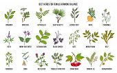 Best Herbs For Female Hormone Balance. Hand Drawn Vector Set Of Medicinal Plants poster