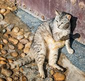 Tabby Cat Lying On A Stone Pavement Near An Old Metallic Door poster