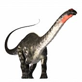 image of giant lizard  - The Apatasaurus dinosaur was a herbivore of the Jurassic Era - JPG