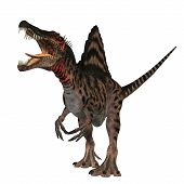 stock photo of vicious  - The Spinosaurus dinosaur was a huge carnivore of the Cretaceous Period of Earths history - JPG