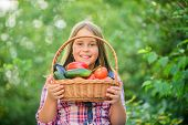 Gmo Free. Kid Gathering Vegetables Nature Background. Eco Farming. Girl Cute Smiling Child Living He poster