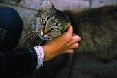 Woman Hand Stroking Street Cat. People Support Pets. Human Hand Caresses Abandoned Homeless Animal C poster