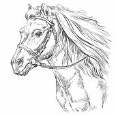 Horse Portrait With Bridle. Horse Head With Long Mane In Profile In Black Color Isolated On White Ba poster
