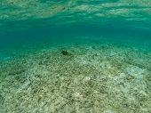 Underwater View Of Bleached White Dead Coral In The Maldives, While A Tropical Fish Swims By poster