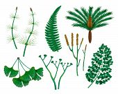 Prehistoric Plants Set With Isolated Images Of Wild Herbs Of The Prehistoric Times On Blank Backgrou poster