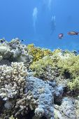 Colorful Coral Reef At The Bottom Of Tropical Sea, Divers, Underwater Landscape poster