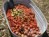 pic of craw  - cooked boil craw fish in a tub - JPG
