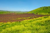 foto of golan-heights  - Rows of Vines on the Field in Golan Heights Early Spring - JPG