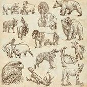 pic of horse plowing  - Animals around the World  - JPG